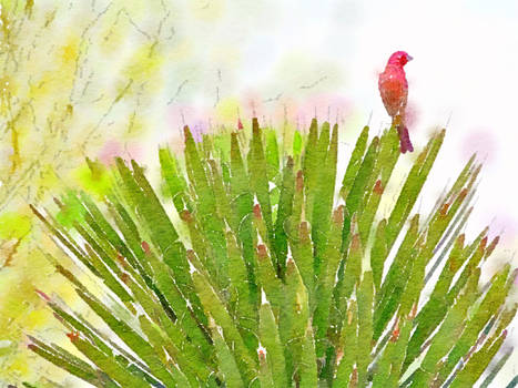 Red Bird watercolor
