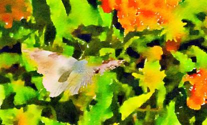 Butterfly in Flight watercolor