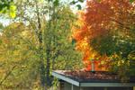 Shedding Autumn