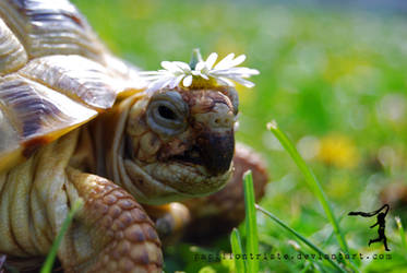 Mr. Turtle Bathes In The Sun by PapillonTriste