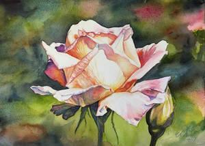 Judy's Rose
