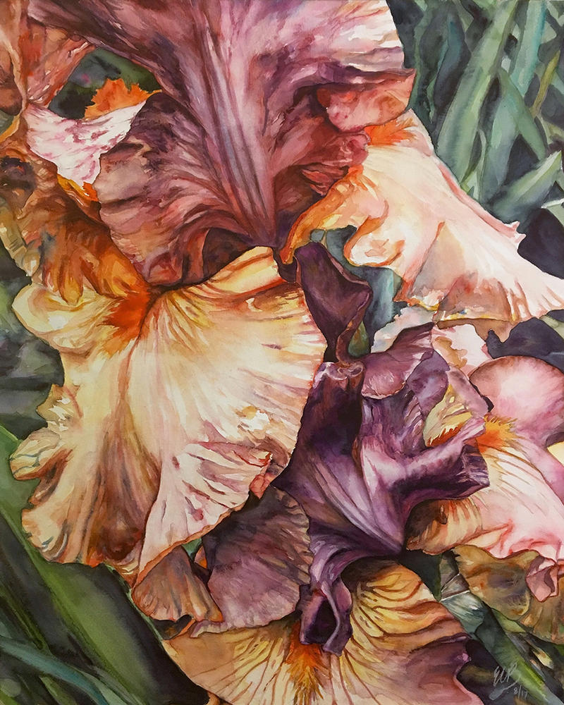 Heirloom Irises by ebjeebies