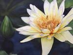 Three Bees - Waterlily by ebjeebies