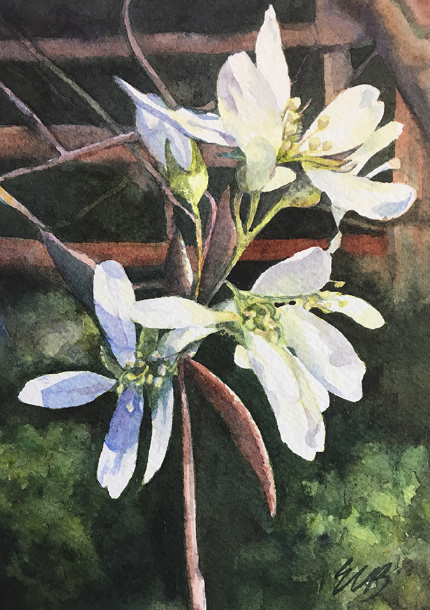 White Blooms on a Spring Afternoon