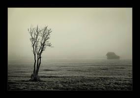 Cold by irinush