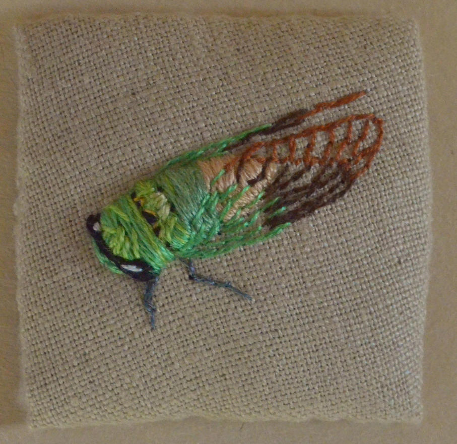 Superb Green Cicada by imagination-heart