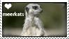 Love Meerkats Stamp by meerkatsandall