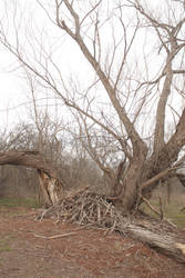 Arched Tree #2