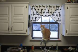 Cat in the Kitchen Window