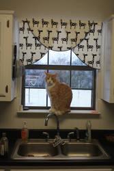 Cat in the Kitchen Window #2