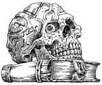 TFTMS-skull-F-BKM-lo