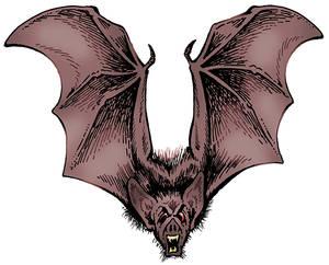 CAC574-Bat-lo