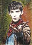 Merlin mini-portrait