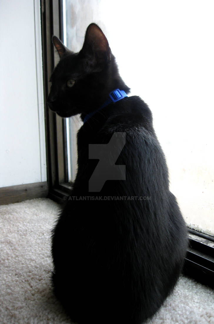 Window Watcher 3