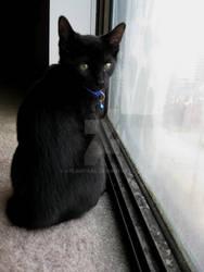 Window Watcher 4