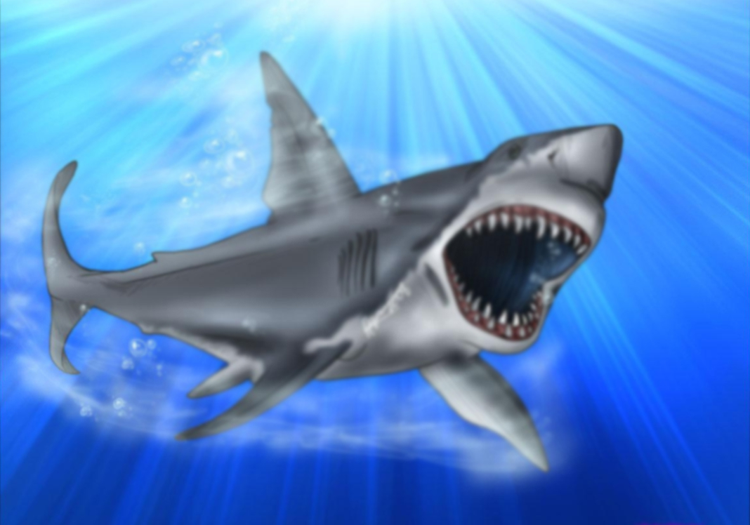 Angry shark drawing