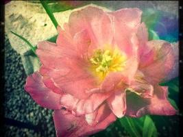 flower's Photo by Alice097