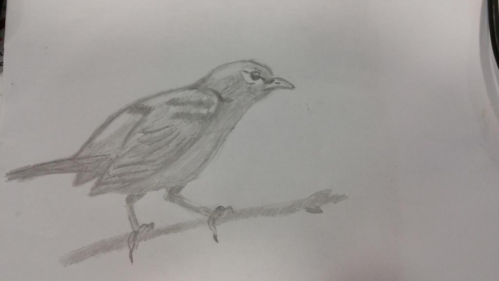 bird by Hmcmurray