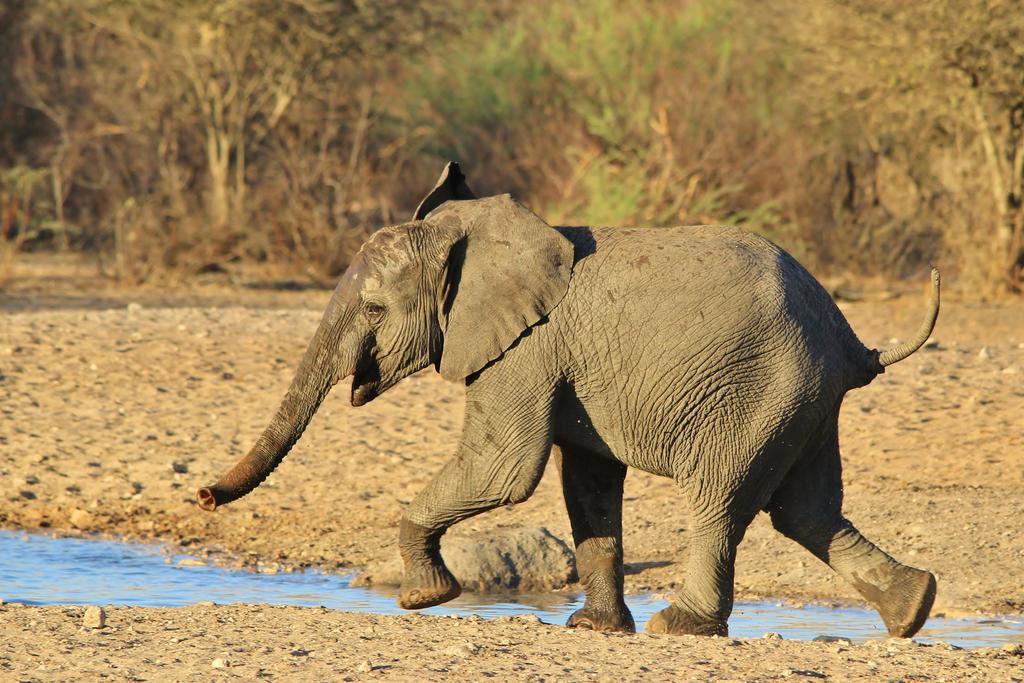 African Elephant - Cute Baby Run by LivingWild
