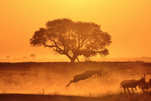 Tree of Life - African Wildlife and Sunset