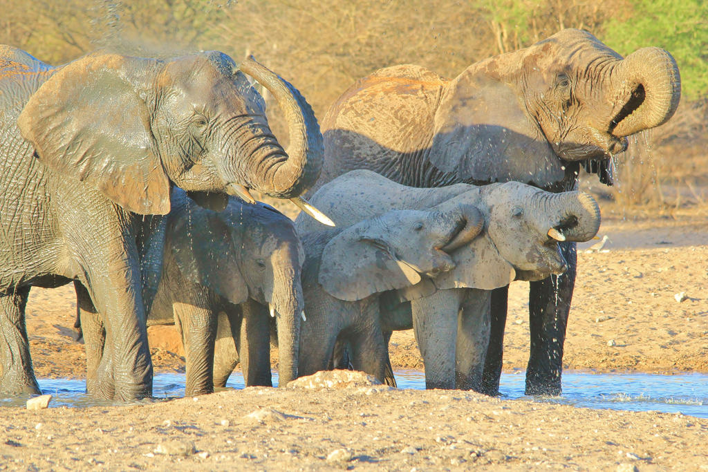 African Elephant - Pleasure of Life and Water by LivingWild