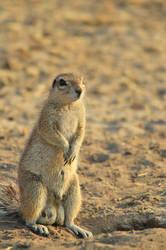 Ground Squirrel - When Duty Calls