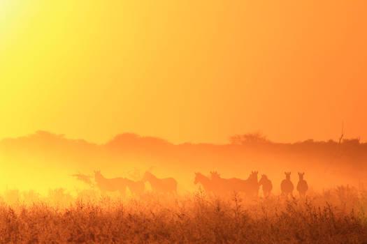 Zebra Silhouette - Life's Golden Dust