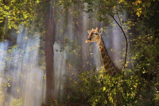 Giraffe Magic - Forest of Mist and Wonder