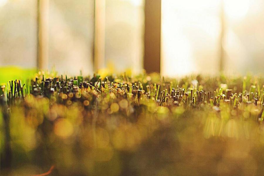 Sunset across grass by anshu18