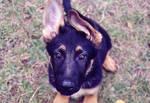 Moruz - Puppy