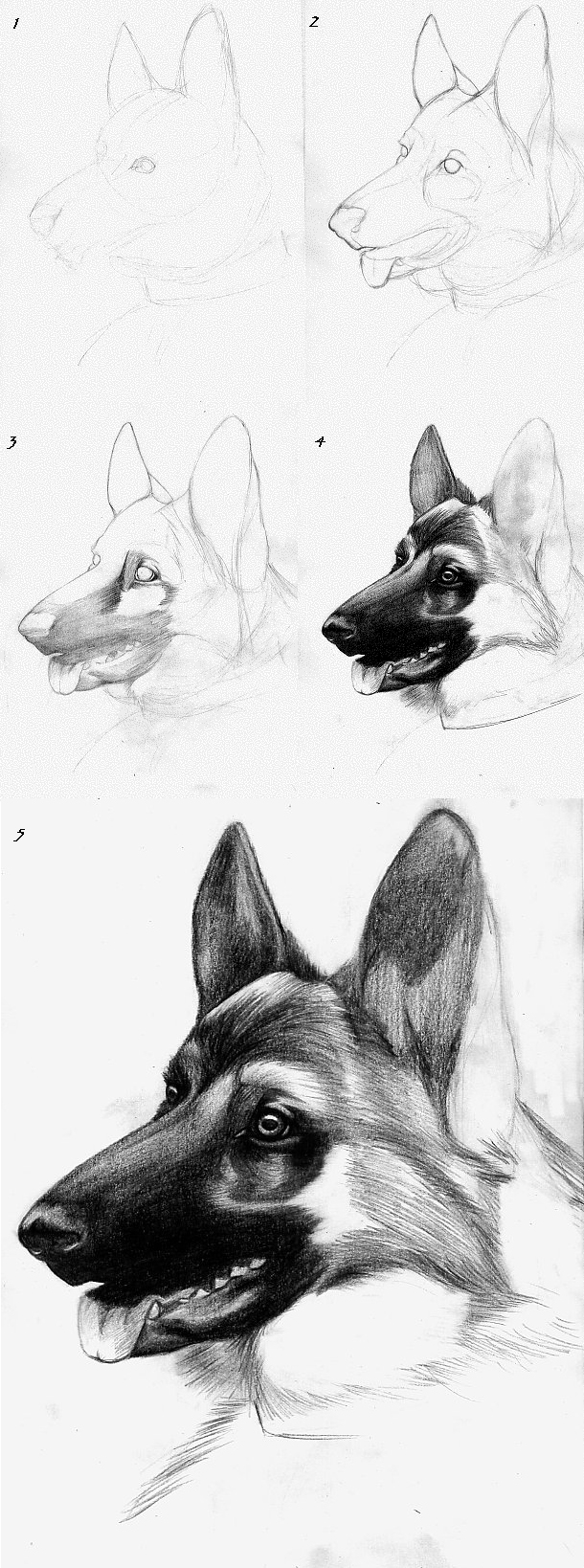 It is an image of Satisfactory Dog Drawing Ideas