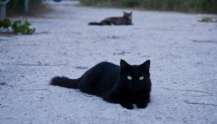 Hypnotist by blackcat101