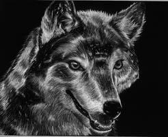 Wolf done on scratch board