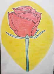 a single rose 2