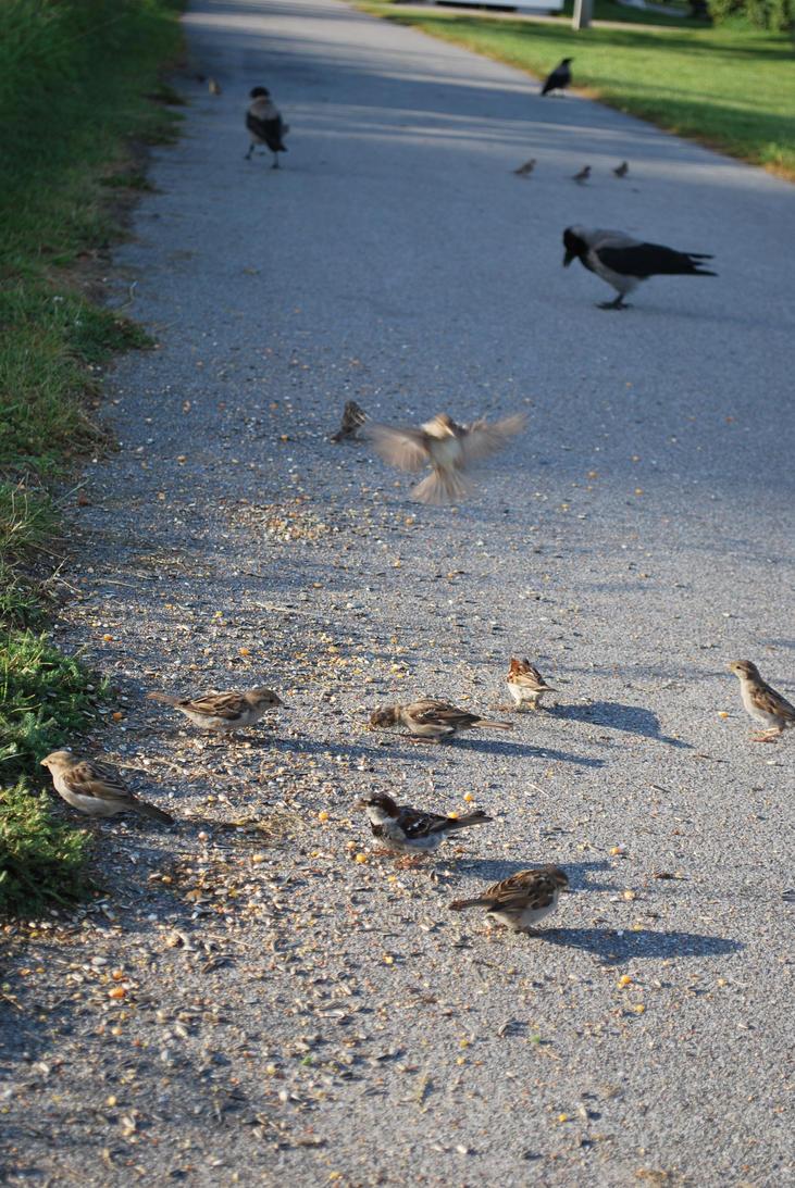 Charlottenlund Fort 30.07.16 - Birds 3 by SivargDK