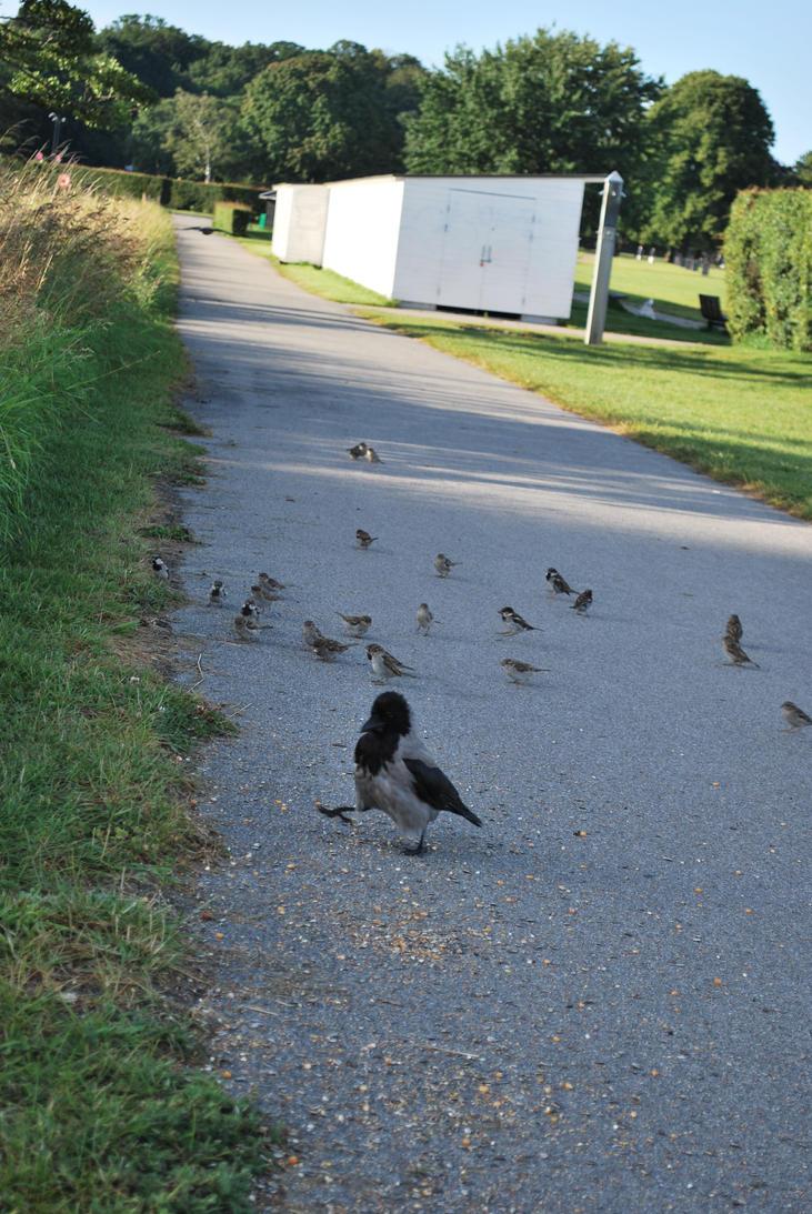 Charlottenlund Fort 30.07.16 - Birds 4 by SivargDK