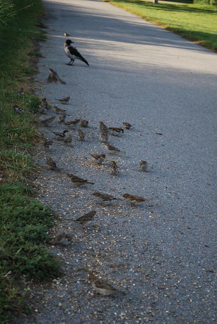 Charlottenlund Fort 30.07.16 - Birds 5 by SivargDK