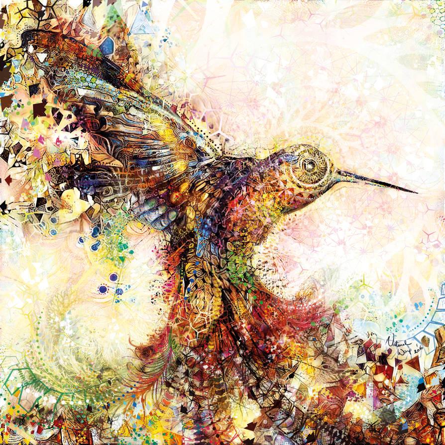 Hummingbird of Paradise