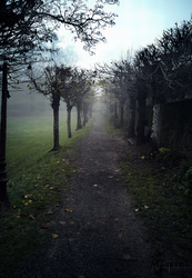 Morning stroll in park