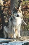 My Bone 2 - Wolf by ph0t0k1tty