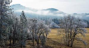 Winter Mist