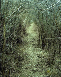 elven wood by makatka