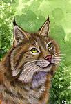 Cats of North America: Bobcat