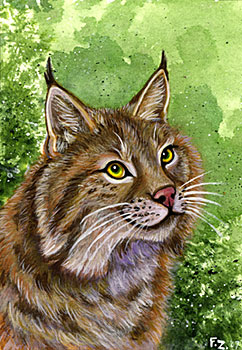 Cats of North America: Bobcat by Foxfeather248