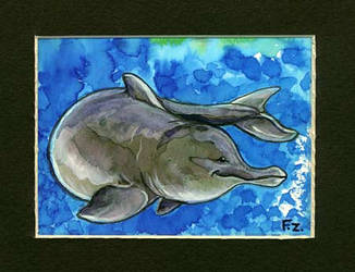 River Dolphin ACEO by Foxfeather248