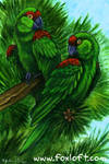 Parrots in the Pine Trees