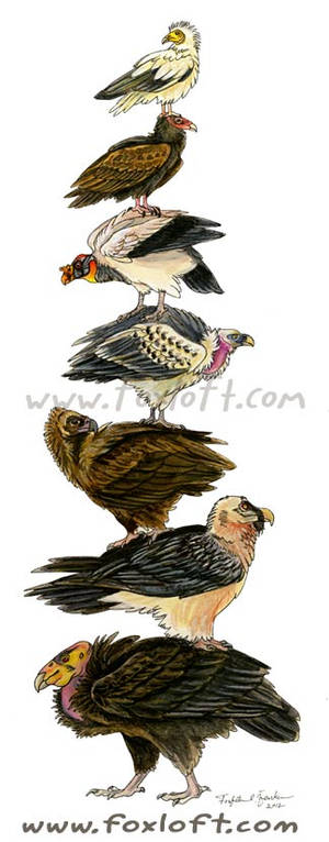 Vulture Stack