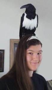 Foxfeather248's Profile Picture