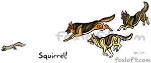 Squirrel! German Shepherd Dogs
