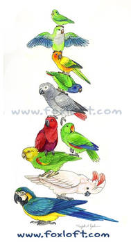 Parrot Stack